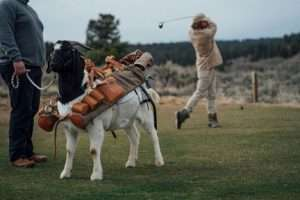 Read more about the article Goats As Caddies
