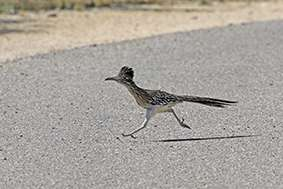 Read more about the article Roadrunner Breaks An 'Egg'
