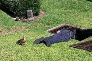 Ducklings Down The Drain