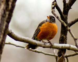 His First Birdie – Was A Robin