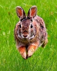 Rabbits At Trilogy