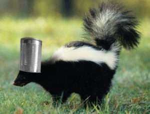 Skunk's Head In  Can