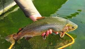 Read more about the article Trout Fishing At The Broadmoor