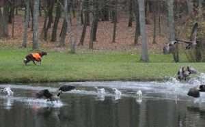 Goose Steals Putter