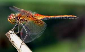 Read more about the article Dragonfly On Hat