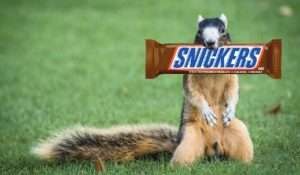 Read more about the article Fox Squirrel Loves Snickers Bar