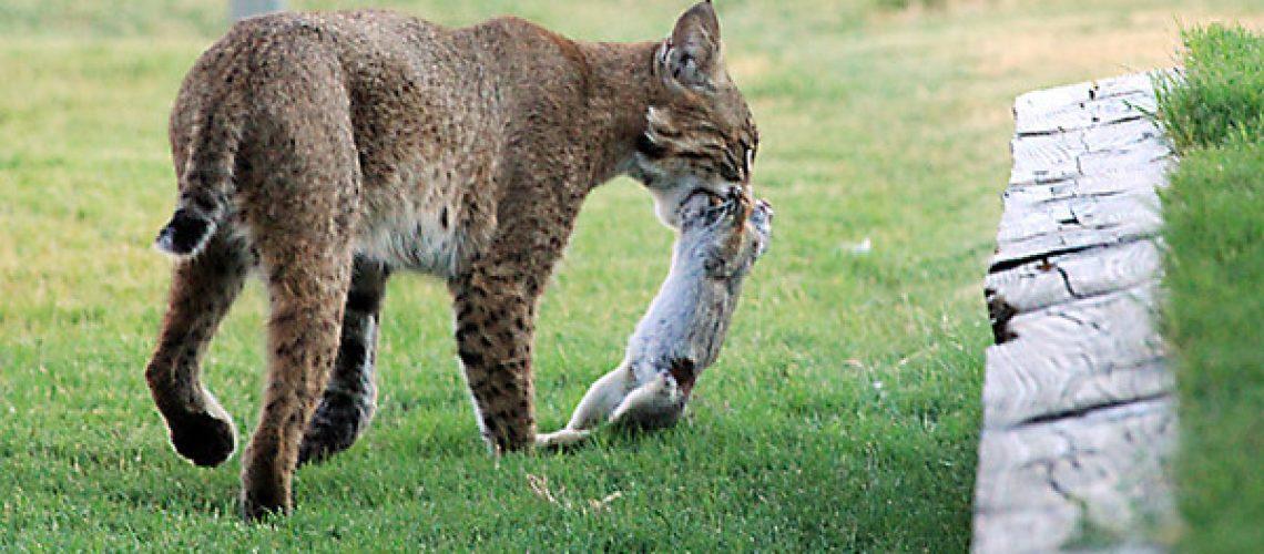 Bobcat Dinner GolfTales RJSmiley