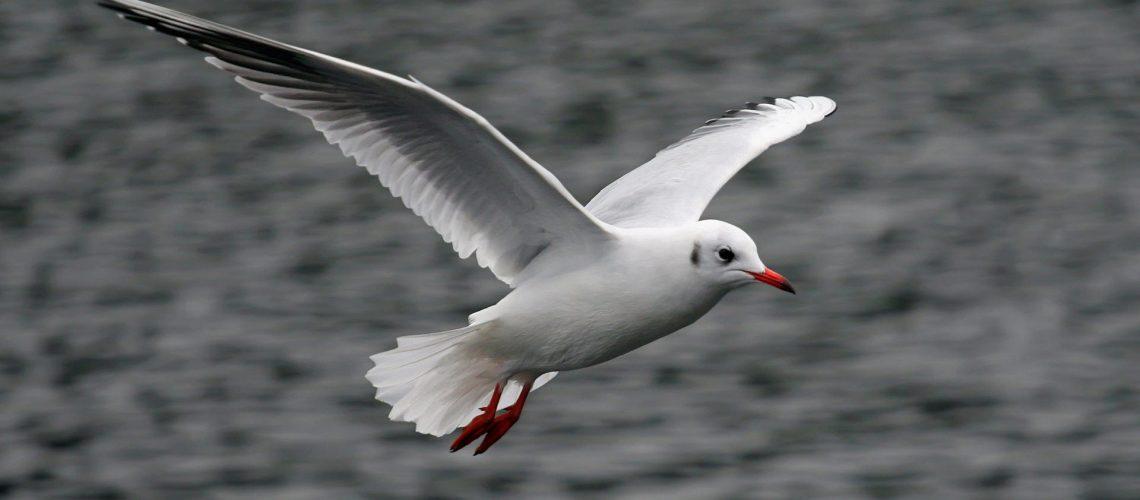Seagull GolfTales RJSmiley