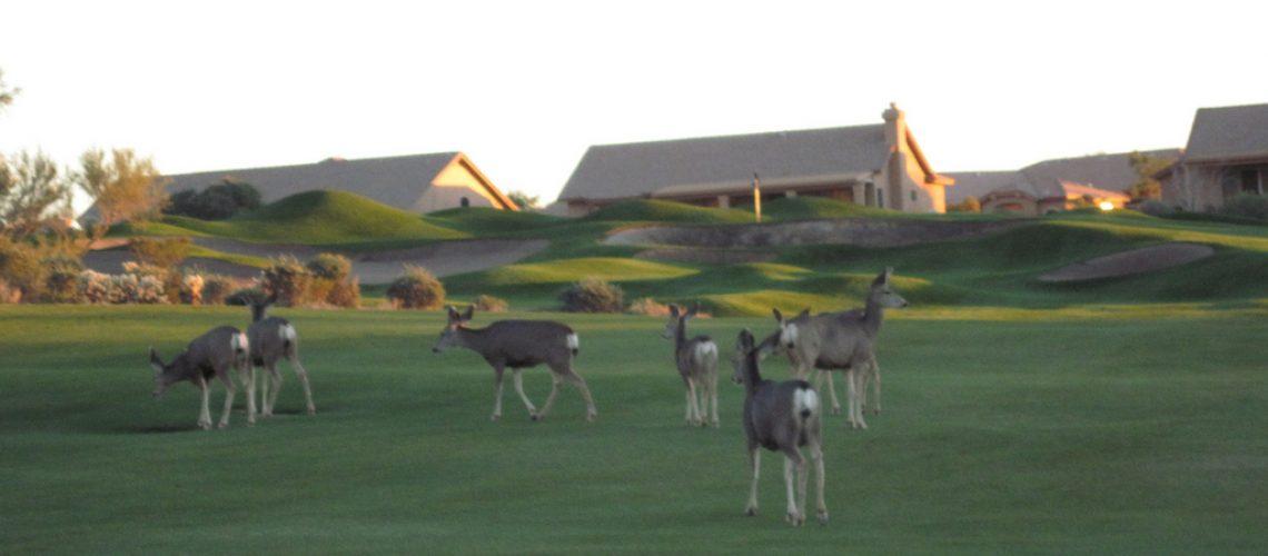 Star Pass Deer GolfTales RJSmiley