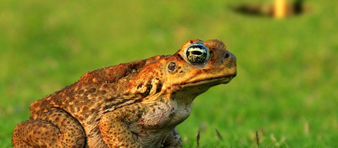 Toad GolfTales RJSmiley