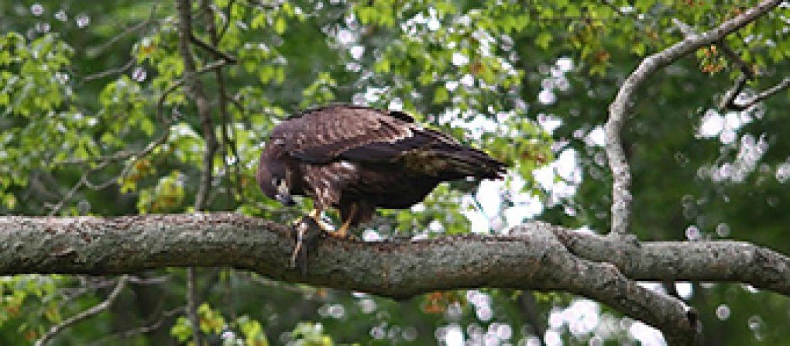 Young-Eagle GolfTales RJSmiley